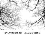 Bare Tree Branches On A Pale...