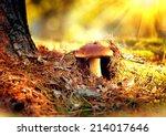 Cep Mushroom Growing In Autumn...