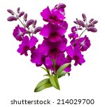 Stock photo flower pink and purple streaked orchid branch isolated on white background 214029700