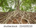 the roots of the banyan tree ... | Shutterstock . vector #214105210