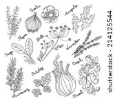 spices and herbs. hand drawn... | Shutterstock .eps vector #214125544