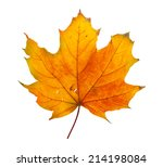 Autumn Maple Branch With Leave...