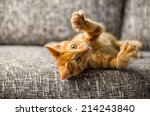 Stock photo little cat playing on the bed 214243840