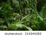 background of green rainforrest ... | Shutterstock . vector #214344283