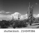 Saguaro Cactus Cereus Giganteu...