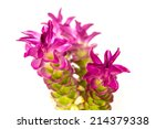siam tulip isolated on white... | Shutterstock . vector #214379338