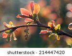 Macro Shoots Of Fruit Trees In...