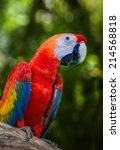 Exotic Scaret Macaw Parrot...