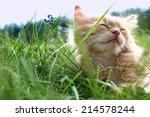 Relax Kitten On Green Grass