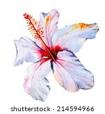 Hibiscus  Watercolor Tropical...