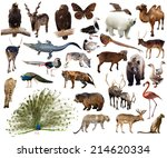 set of indian peafowl and other ... | Shutterstock . vector #214620334