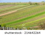 spring vineyards  southern... | Shutterstock . vector #214642264