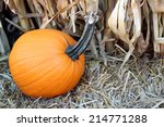 Pumpkin  Hay  Dry Corn For...