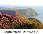 blooming purple heather with...