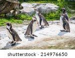 Five Penguins   Penguins...
