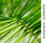closeup detail of palm tree...   Shutterstock . vector #215003254