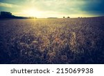 vintage photo of corn field | Shutterstock . vector #215069938
