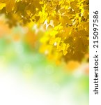 abstract image of autumn yellow ... | Shutterstock . vector #215097586