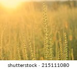 Golden Sunset On The Meadow An...