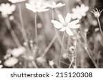 Wild White Flowers In The...