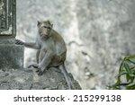 monkeys cute  | Shutterstock . vector #215299138