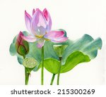 Lotus Blossom With Lily Pad. ...