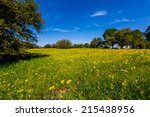 A Texas Meadow Full Of Various...