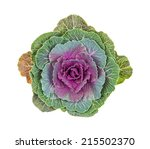 Purple Ornamental Cabbage On A...
