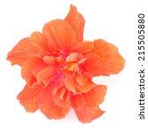 Colorful Orange Hibiscus Flowe...