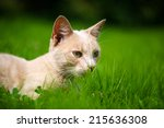 Stock photo cute orange cat on the green grass 215636308