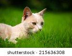 Stock photo cute orange cat on the green grass 215636308