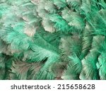 Ostrich Feathers Background In...
