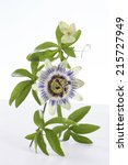 Passion Fruit Flower And Leaves ...