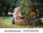 Cute Child Picking Harvest Of...