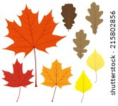set of eight vector leaves for... | Shutterstock .eps vector #215802856