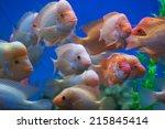 Amphilophus Citrinellus Is...