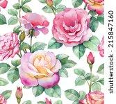 Watercolor Rose Flowers...