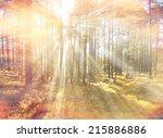 autumn forest sunbeams | Shutterstock . vector #215886886
