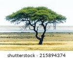 Lonely Tree In Etosha National...