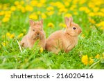 Little Rabbits Sitting On The...