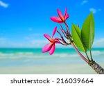 Plumeria Flower On Beach...