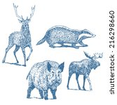 forest animals drawings set... | Shutterstock .eps vector #216298660