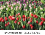 blurred colorful flowers... | Shutterstock . vector #216343783