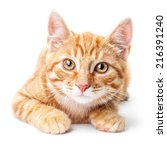 Stock photo close up of red kitten isolated on a white background 216391240
