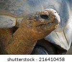 Huge Galapagos Tortoise Larges...