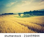 vintage photo of corn field.