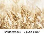harvest | Shutterstock . vector #216551500