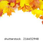 autumn maple leaf isolated on... | Shutterstock . vector #216652948