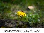 a bee | Shutterstock . vector #216746629