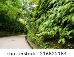 Wall Of Ferns In The Park At...